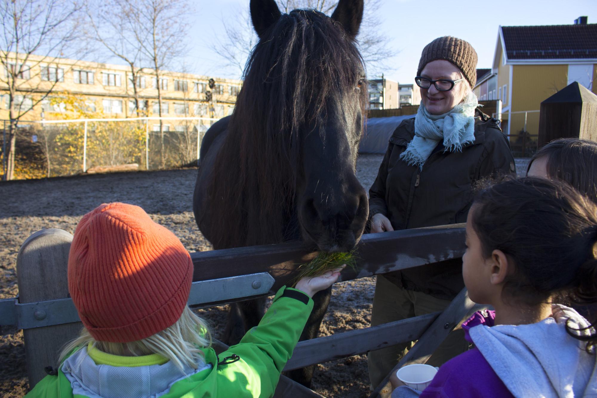 Dølahesten Svarten er en av tre hester som bor på gården. De får ofte oppdrag i både barnebursdager og juletrefester. Og på selveste juleaften leverer fjøsnissen og hesten hans ut gaver hjemme hos barn i nærområdet. (Foto: Susanne Svendsen)